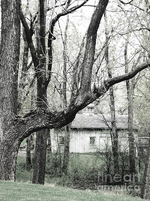 Kole OHagan - Old Cabin