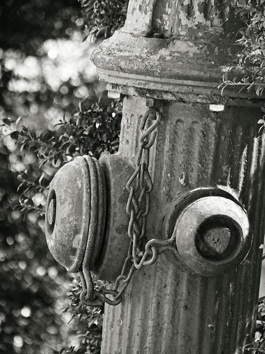 Brenda Conrad - Old Fire Hydrant