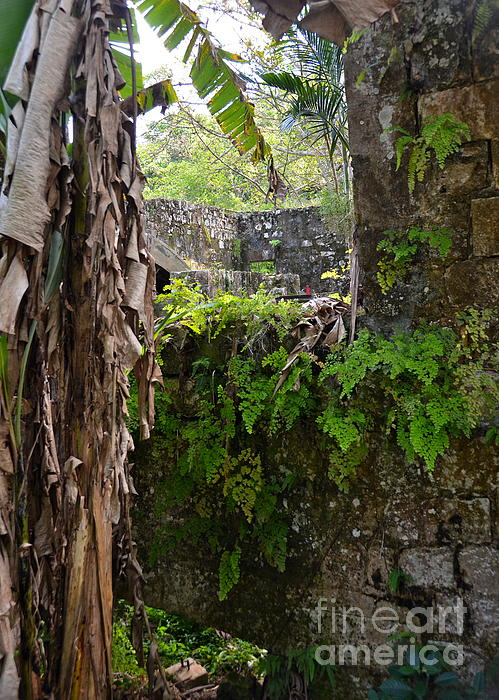 Old Jamaican Sugar Mill Print by Carol  Bradley
