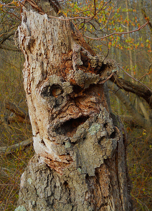 William Kaluta  - Old Man In The Tree   William Kaluta Photography