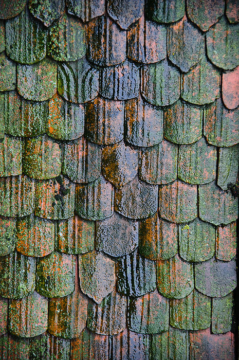 Old Roof Tiles Print by Jen Morrison