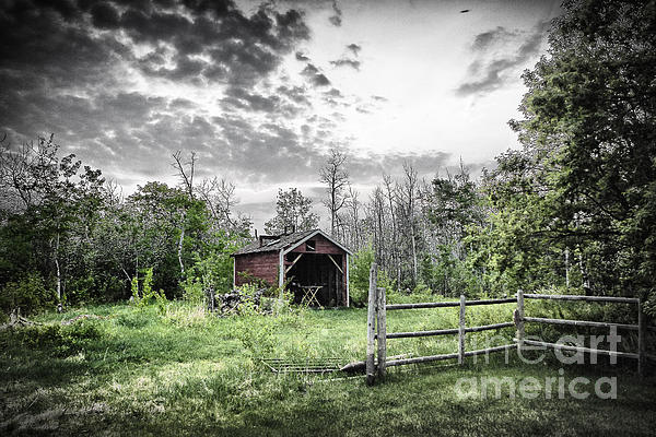 Old Shed Print by Lori Frostad