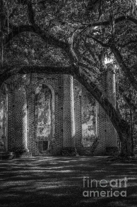 David Waldrop - Old Sheldon Church and Oak
