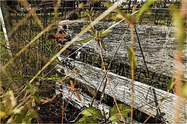 Debbie Portwood - Old weathered gate photoart II