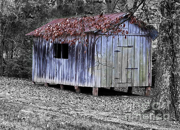 Old Weathered Shed Print by Betty LaRue