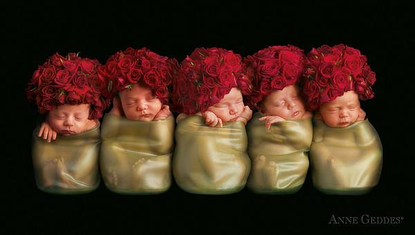 Olivia, Alice, Hugo, Imogin-rose & Mya As Roses Print by Anne Geddes