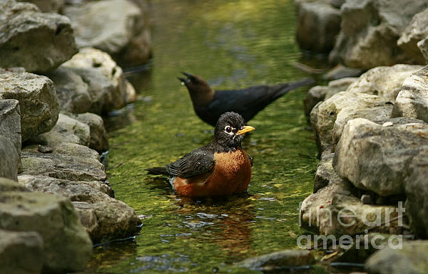 Inspired Nature Photography By Shelley Myke - On a Hot Summer Day- Birds of a Feather Bath Together