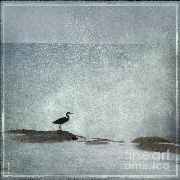 On The Rocks Print by Linde Townsend