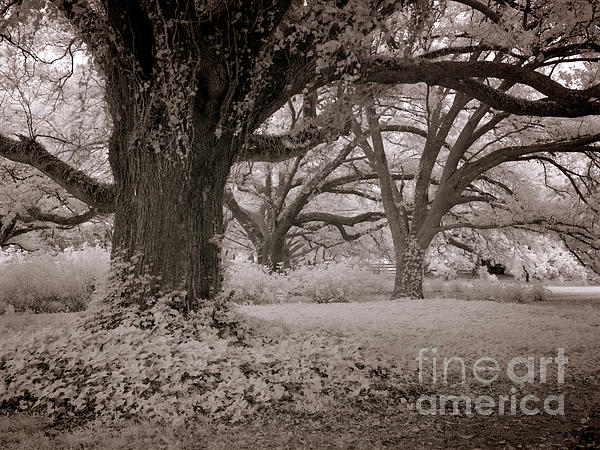 Heinz G Mielke - Only God can make Trees