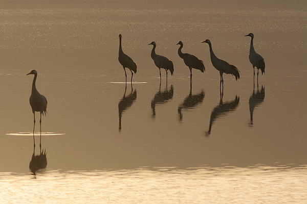 Opening Quintet Print by Alon Meir