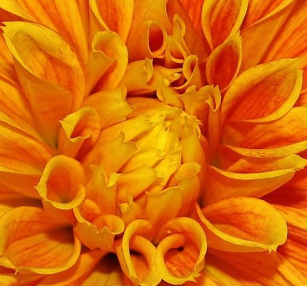 Bruce Bley - Orange Blast