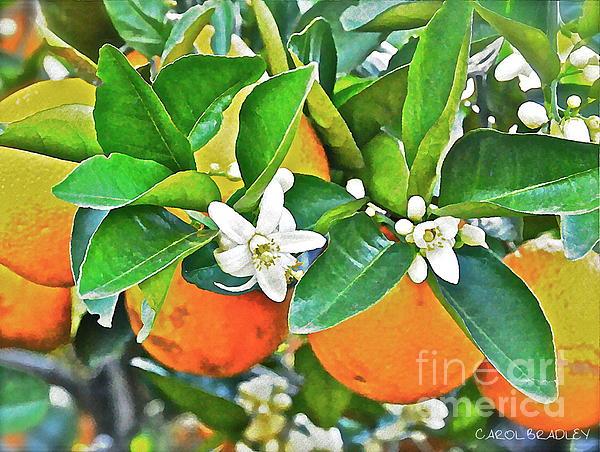 Orange Blossom Special Print by Carol  Bradley