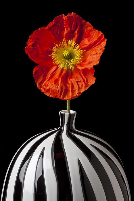 Orange Iceland Poppy Print by Garry Gay