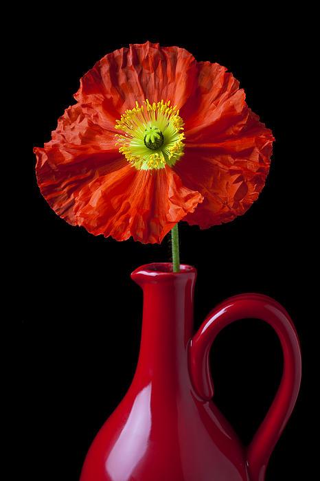Orange Iceland Poppy In Red Pitcher Print by Garry Gay