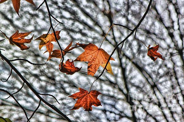 Jeff Breiman - Orange Leaves