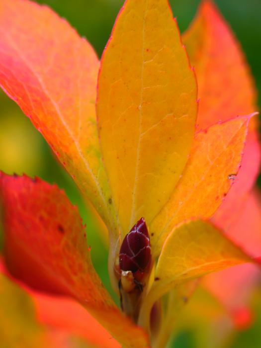 Orange Leaves Print by Juergen Roth