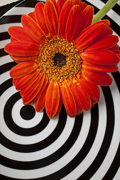Orange Mum With Circles Print by Garry Gay
