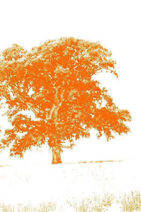 Orange Oak Print by Alan Look