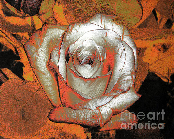 Merton Allen - Orange Rose - Digital Art