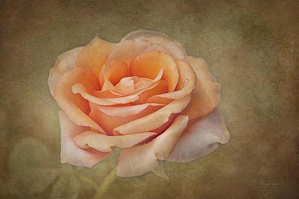 Cheryl Davis - Orange Sorbet