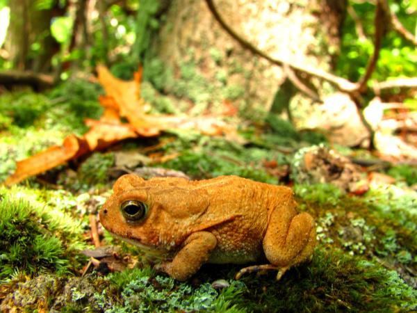 Toad Orange