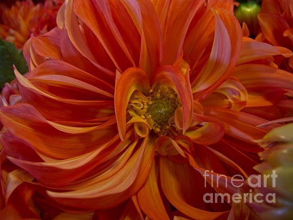 Arlene Carmel - Orange You Happy