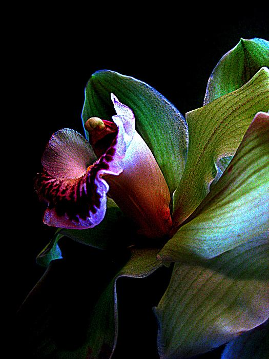 Orchid Gem Print by Shirley Sirois