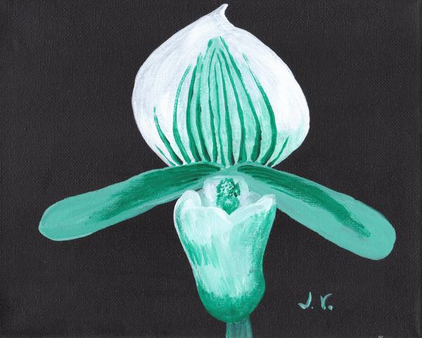 Orchid-paphiopedilum Bob Nagel Print by Jose Valeriano