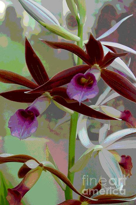 Orchid Sonata Print by Suzanne Gaff