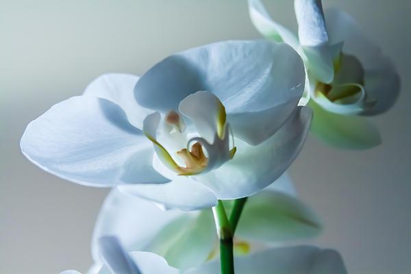 Kaleidoscope Klick Photography - Orchid