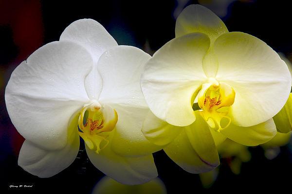Glenn Vidal - Orchid3