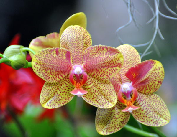 Orchids 35 Print by Marty Koch