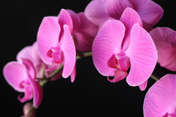 Orchids In Bloom Print by Angie Bechanan
