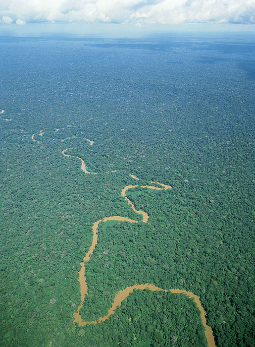 Oriente Tropical Forest, Ecuador Print by Dr Morley Read