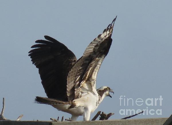 Rrrose Pix - Osprey at Home Oil Print