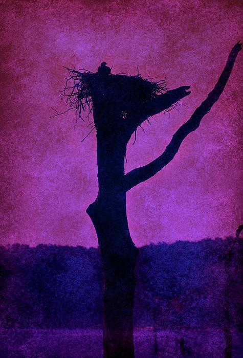 Angie Tirado - Osprey Nest Silhouette - Manasquan Reservoir