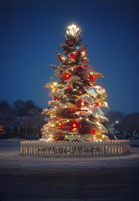 Outdoor Christmas Tree Print by Utah Images