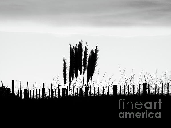 Over The Fence Print by Karen Lewis