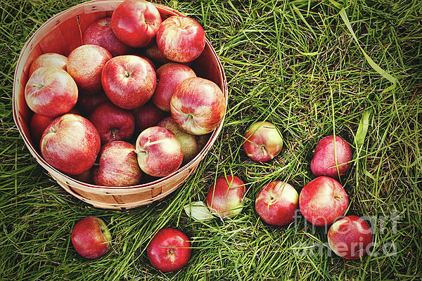 Overhead Shot Of A Basket Of Freshly Picked Apples Print by Sandra Cunningham