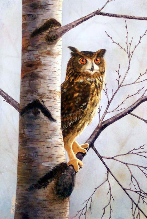 Owl In Birch Painting