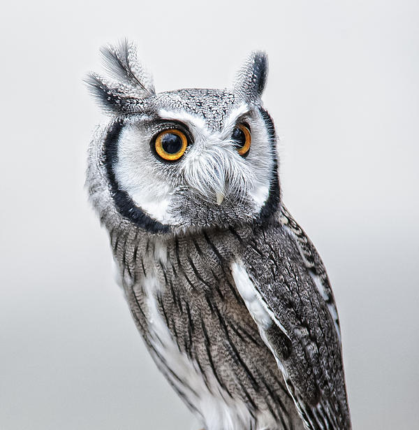 Owl Print by Jen Morrison