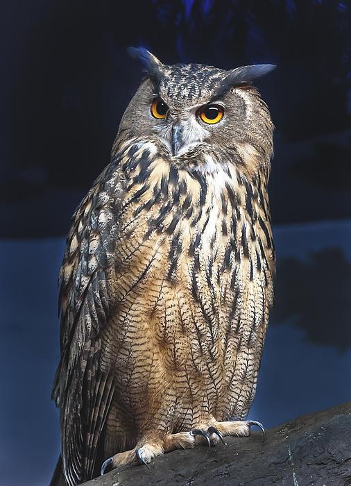 Owl Perch Print by Jen Morrison