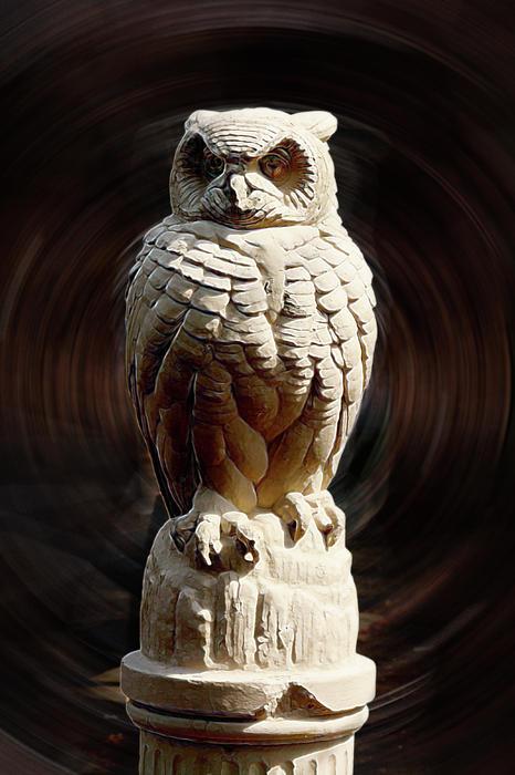 Terry Cork - Owl