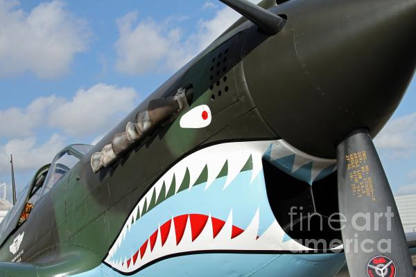 P-40 Flying Tigers Photograph  - P-40 Flying Tigers Fine Art Print