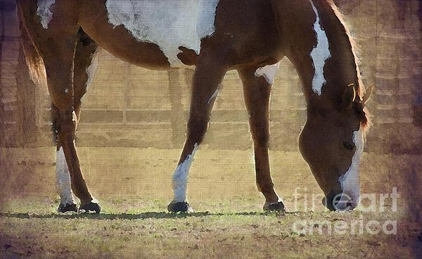 Paint Horse Print by Betty LaRue