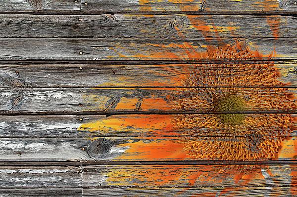 Phyllis Denton - Painted Sunflower