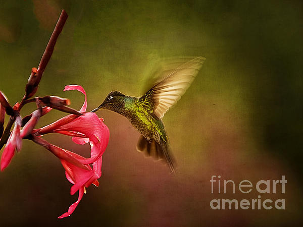 Anne Rodkin - Painterly Hummingbird #1