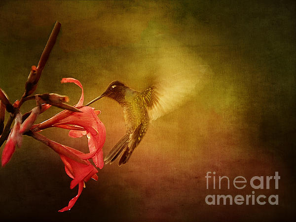 Anne Rodkin - Painterly Hummingbird #2