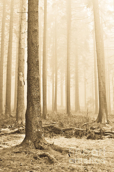Pale Forest Print by Iris Lehnhardt