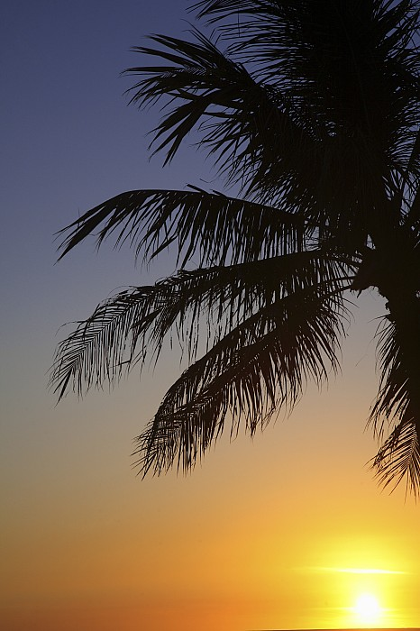 Palm At Sunset Print by Brandon Tabiolo - Printscapes